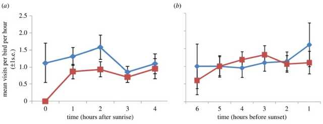 Figure 1. Mean (+/- 1 s.e.) feeder visits per hour per bird for the first and last 4 h of data against time for control (blue diamonds) and fluoxetine-treated birds (red squares). Time is expressed relative to sunrise ( a) and sunset ( b) and so the 4 h period for which observations were taken depended upon the time when birds first fed in the morning and last fed at night.